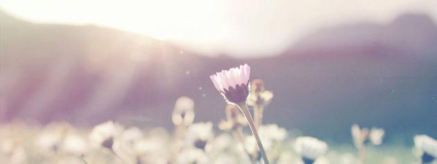 花と風,ハンドメイド作品 販売